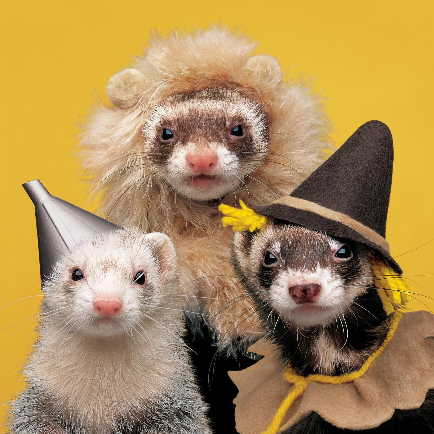Be yourself!!! But maybe wait a few weeks to show the other kids pictures of your dressed up ferrets...