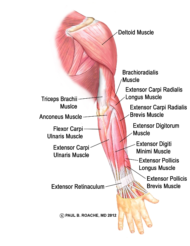Image from yogaglo.com, created by  Paul Roache MD.
