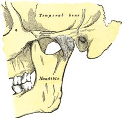TMJ: Temporal bone to mandible