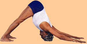 BKS Iyengar shows off a HUGE range of shoulder mobility here in downward facing dog, which is not necessarily how the pose should look or should feel on anyone's body. (Nor should everyone try downward facing dog at all!)