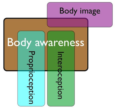 Body awareness also affects body image.  Many psychiatric programs use elements of body mapping to address image after illness, disease, trauma, etc.  If you've ever had a performance injury, you know that your sense of self takes a toll.