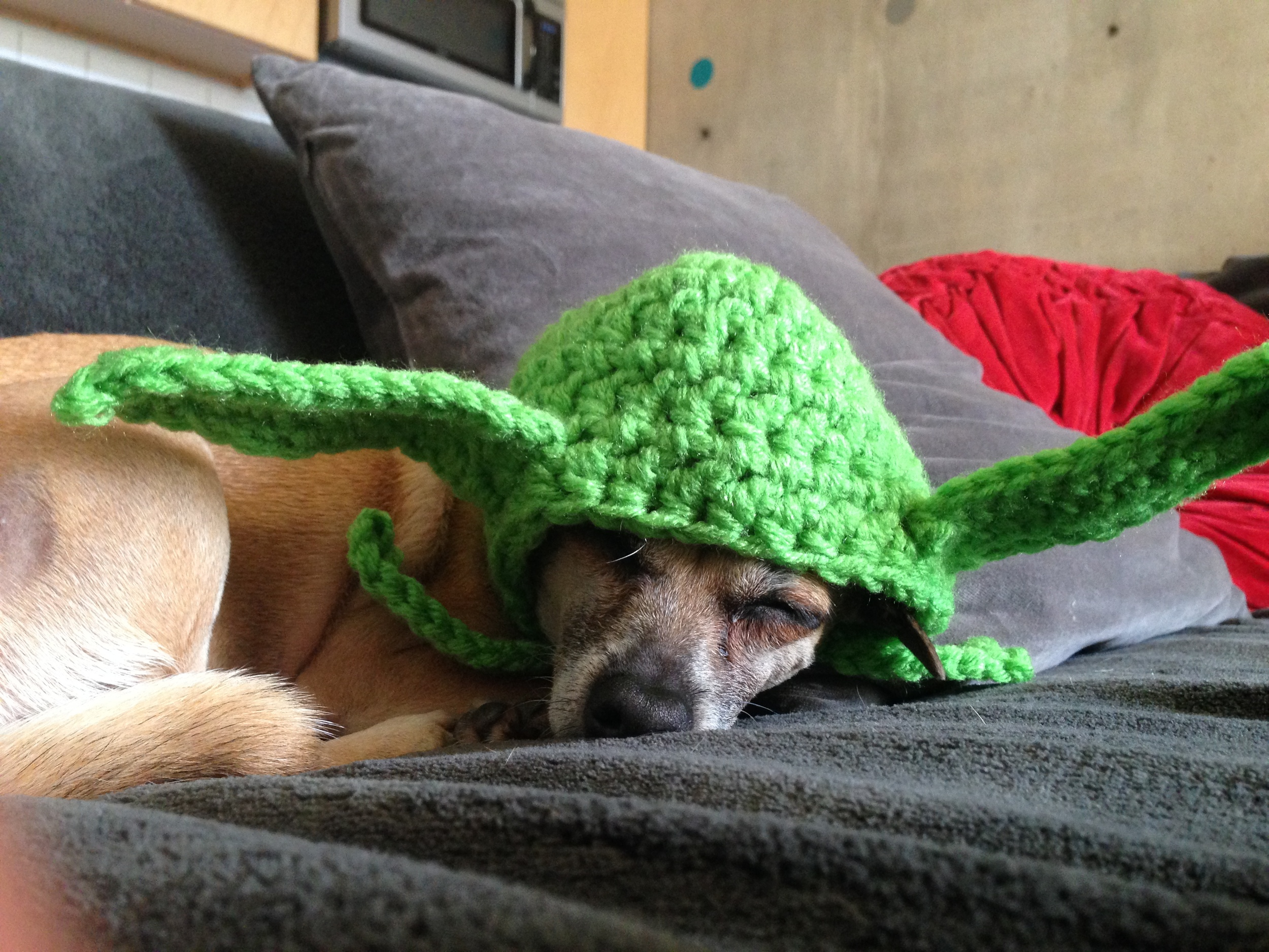 My dog is an excellent sleeper, for the record. Even while wearing knitted yoda ears.