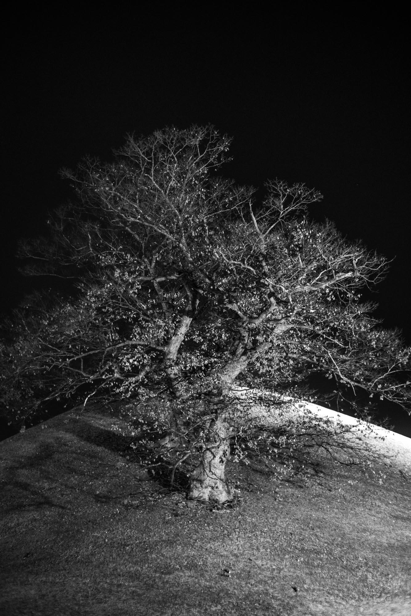 gyeongju-day-night-denis-bosnic-13.jpg