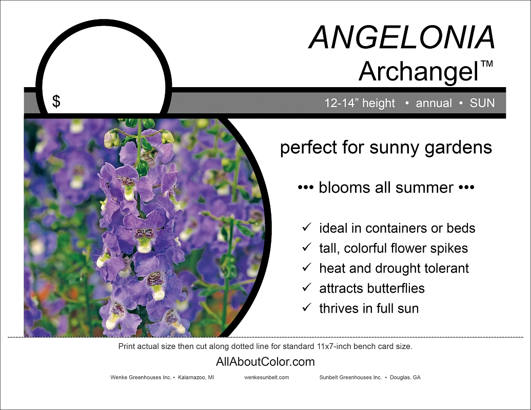 Angelonia ARCHANGEL bench card |  pdf