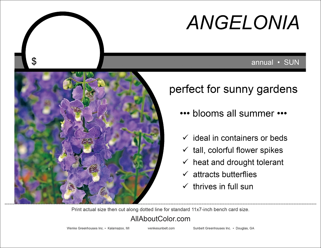 Angelonia bench card |  pdf