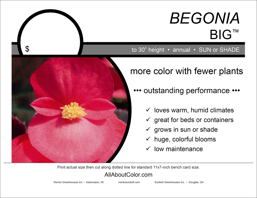 Begonia BIG™ (Sunbelt) bench card |  pdf
