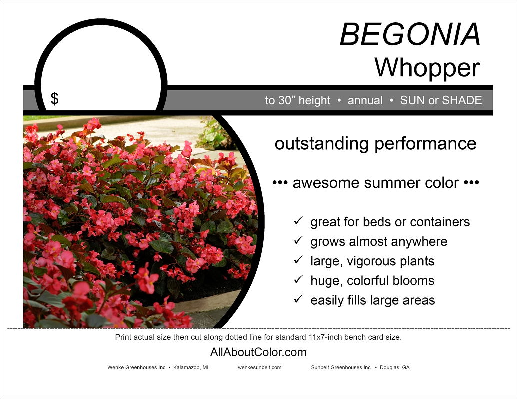 Begonia Whopper (Wenke) bench card |  pdf