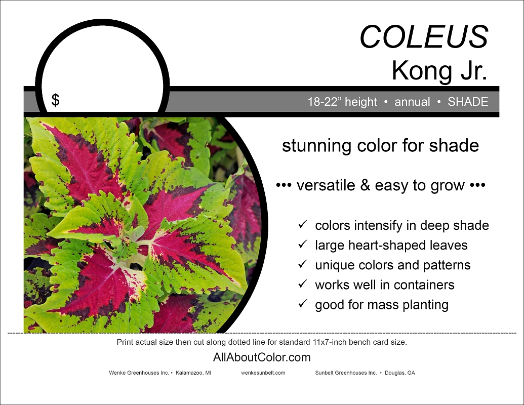 Coleus Kong Jr. bench card |  pdf