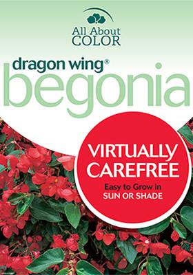 Begonia Dragon Wing page >