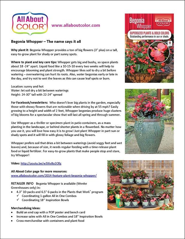 Begonia Whopper |  DOC  |  PDF  |