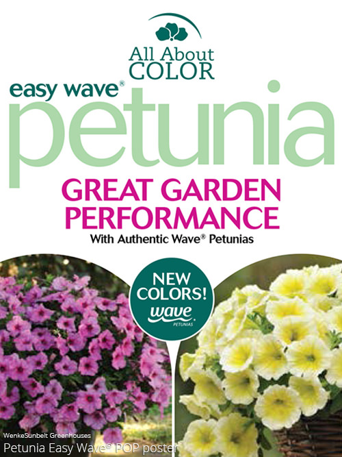 Petunia Easy Wave All About Color