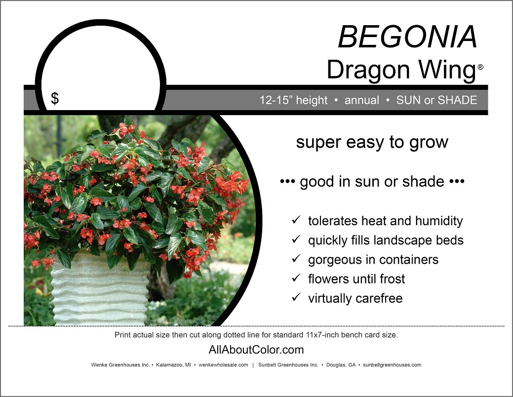 BEGONiA dragon wing Bench Card |  PDF