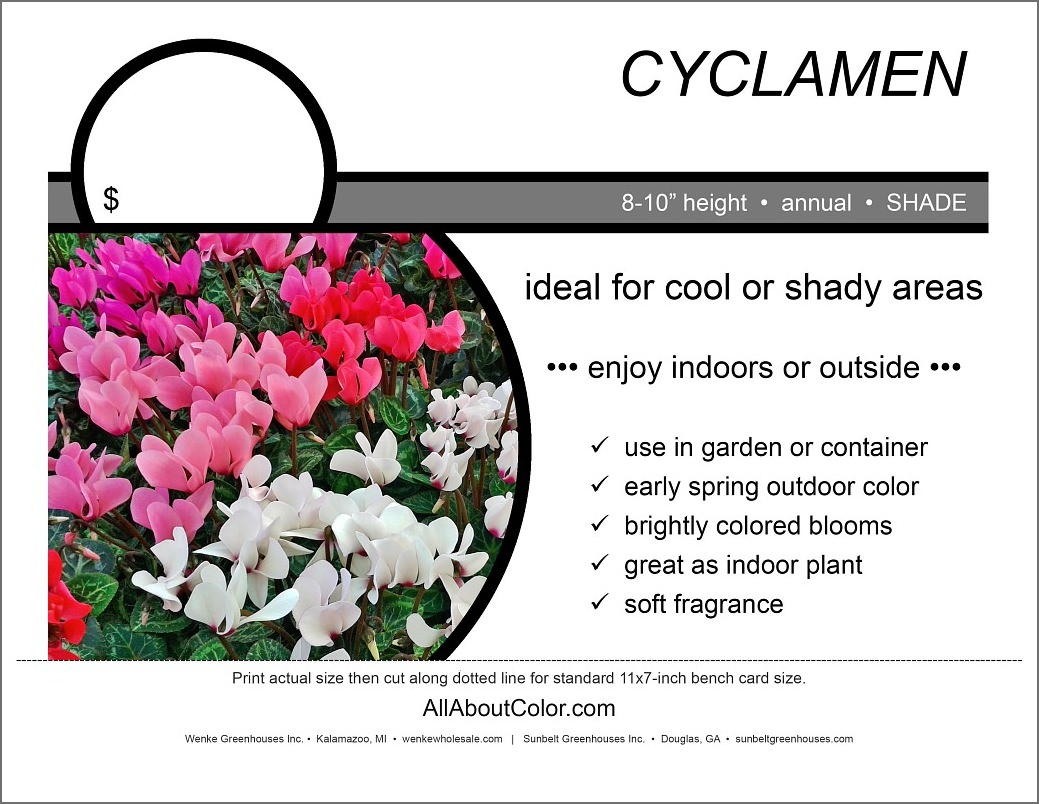 cyclamen Bench Card |  PDF