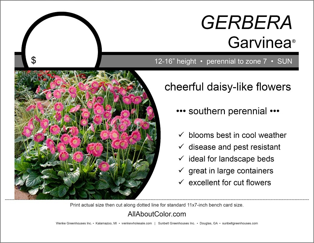 Gerbera Garvinea Bench Card |  PDF