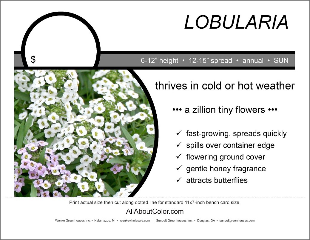 LOBULARIA bench card |  PDF