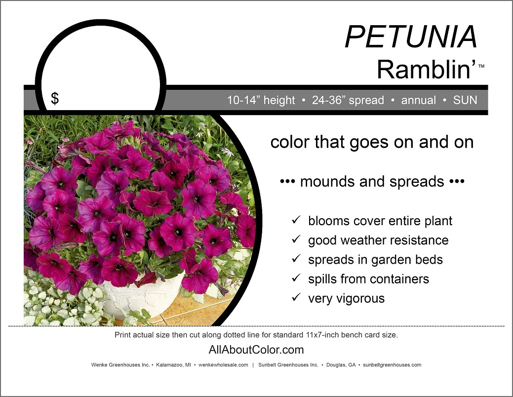 Petunia Ramblin' Bench Card |  PDF