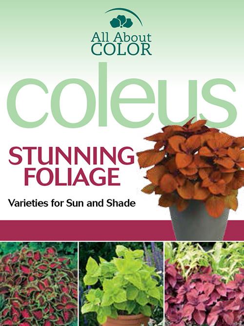 coleus collection page >