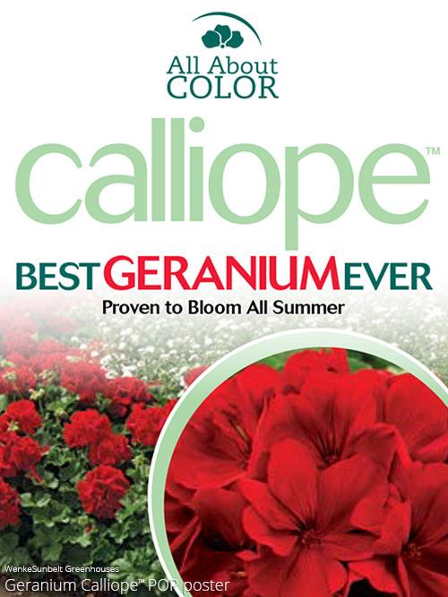 Geranium Calliope >