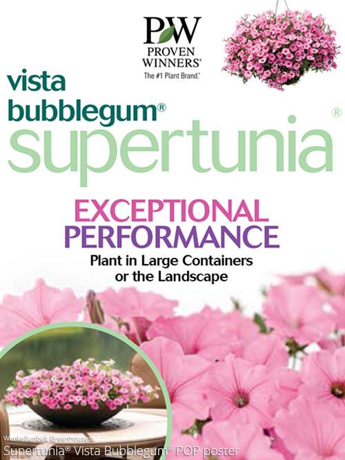 supertunia v. Bubblegum page >