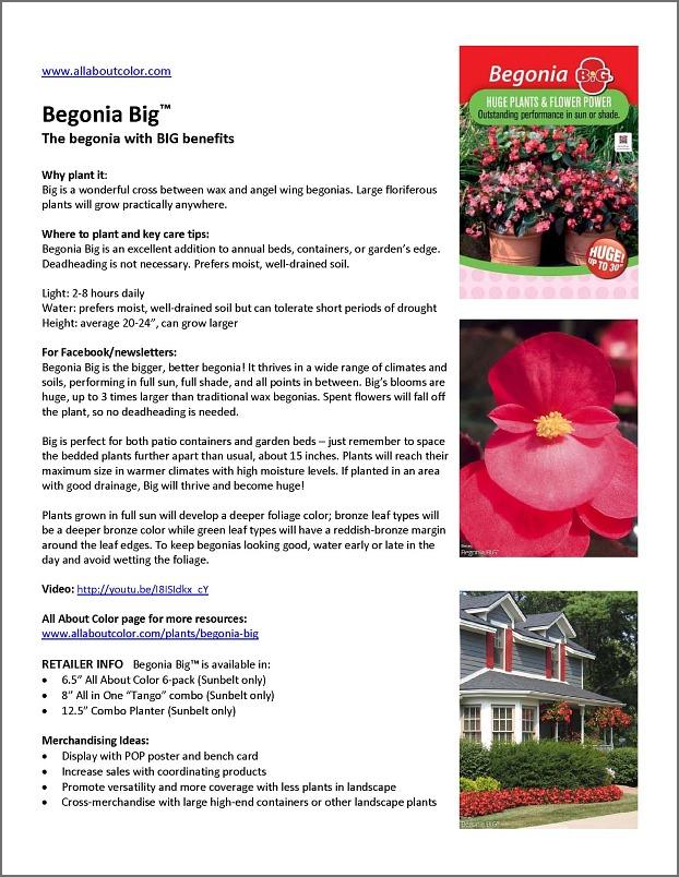 Begonia BIG™ |  DOC  |  PDF  |