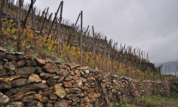 Name of winemaker in photo