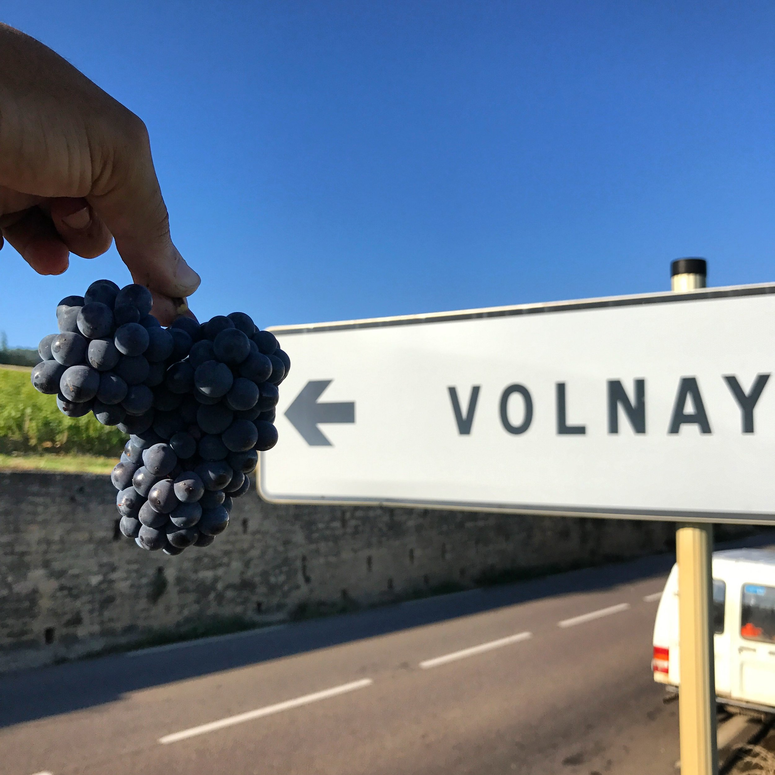 All Signs Lead to Volnay.JPG