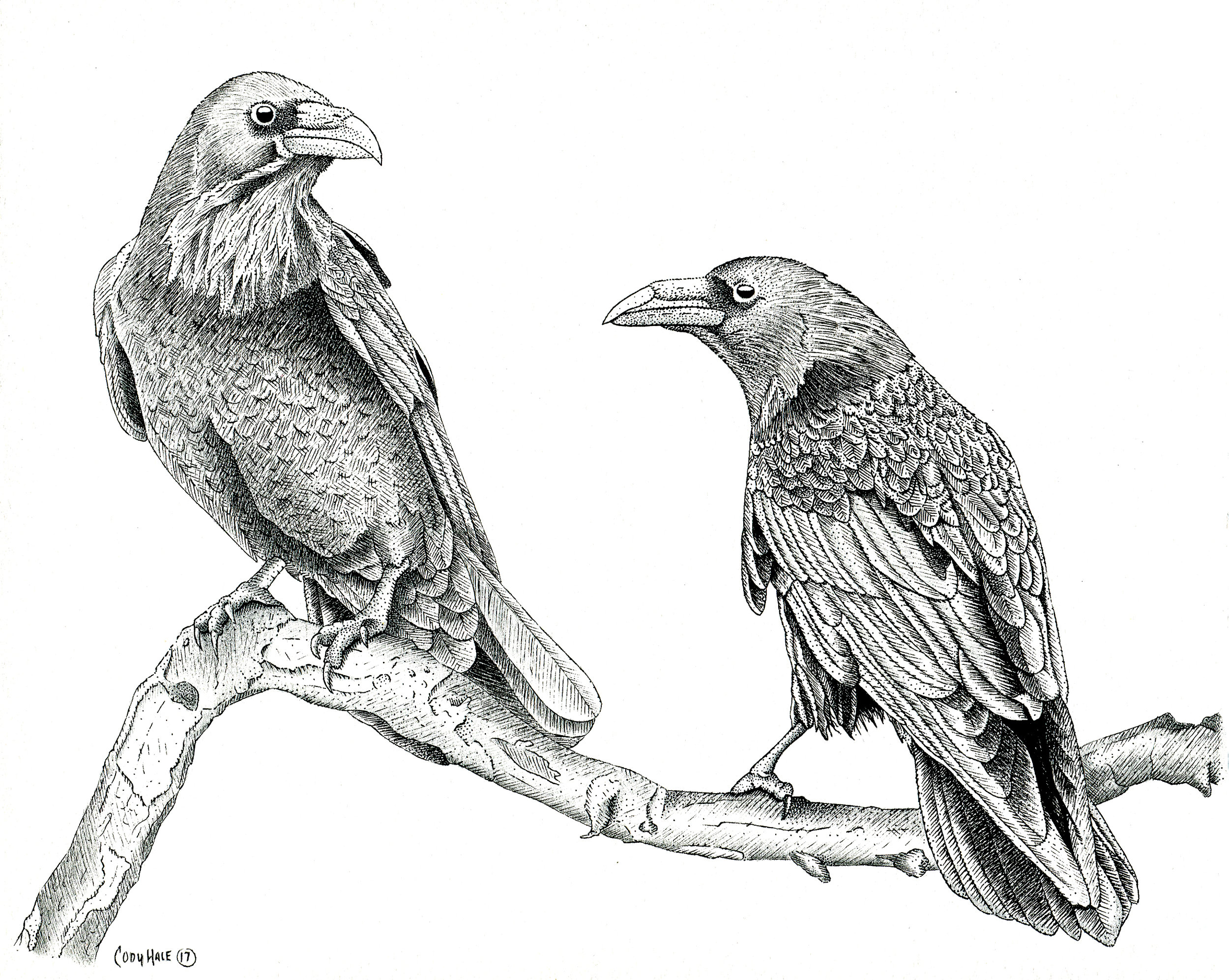crows2web.jpg