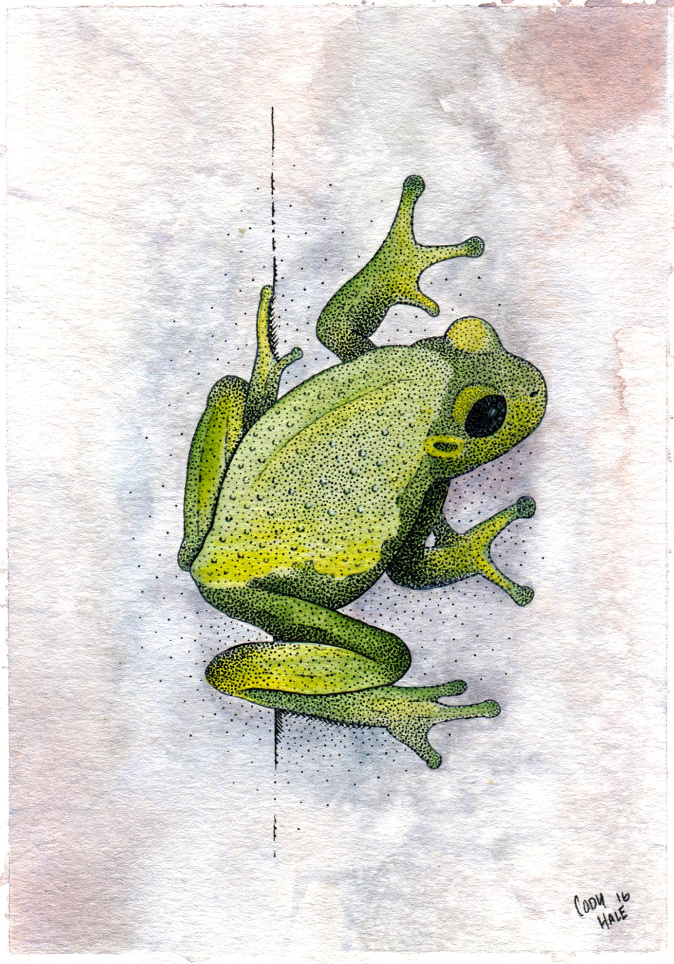 frog2web.jpg