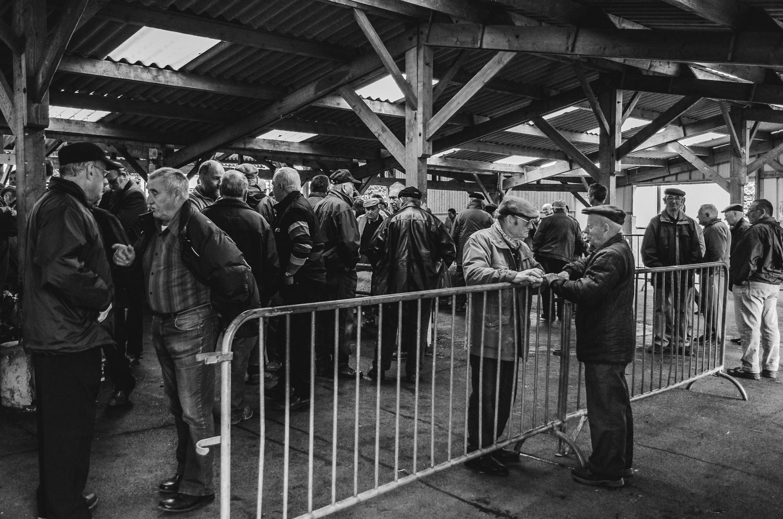 Cattle market Sourdeval-1-2013.jpg