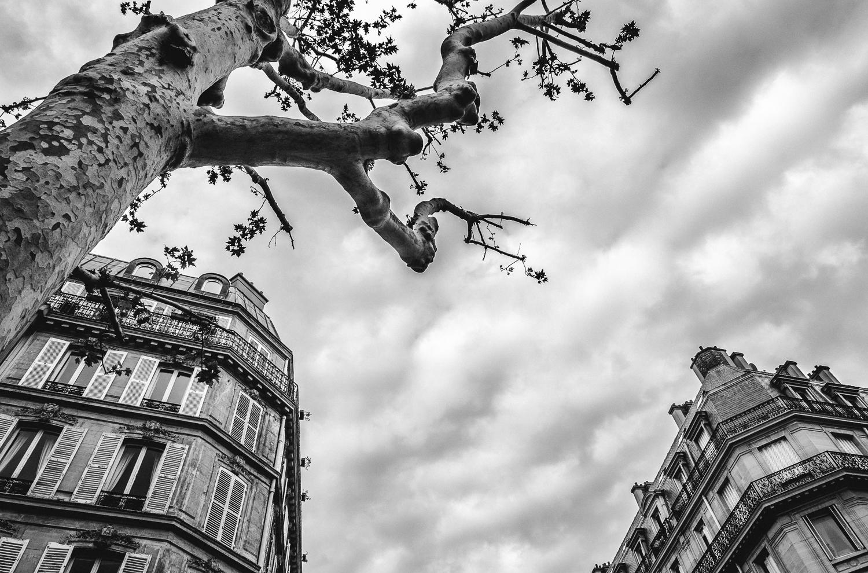 Look up-Paris-2013.jpg