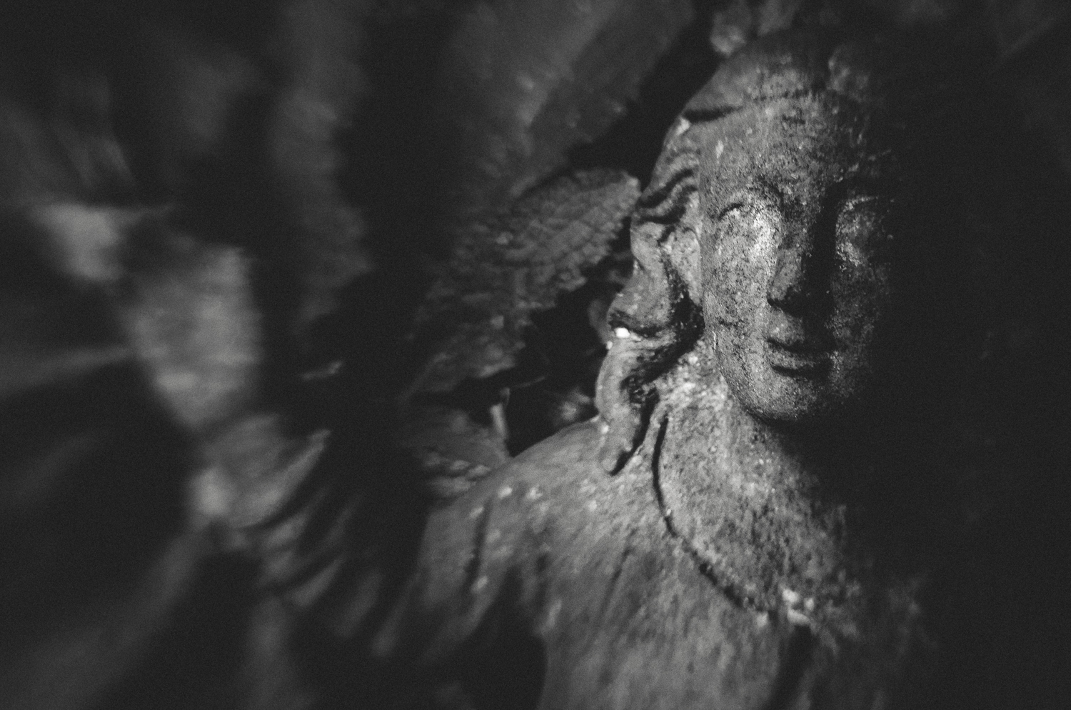 Dark Angel-lensbaby-nov2013.jpg