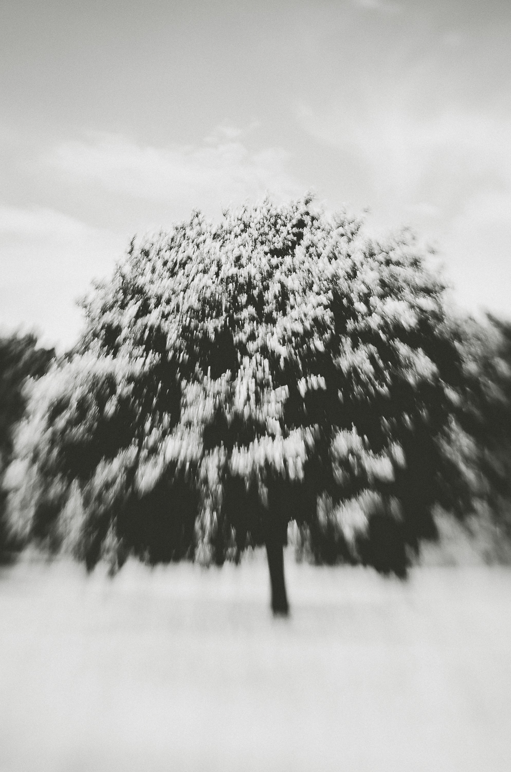 Carnac-the tree she floates-lensbaby-2013.jpg