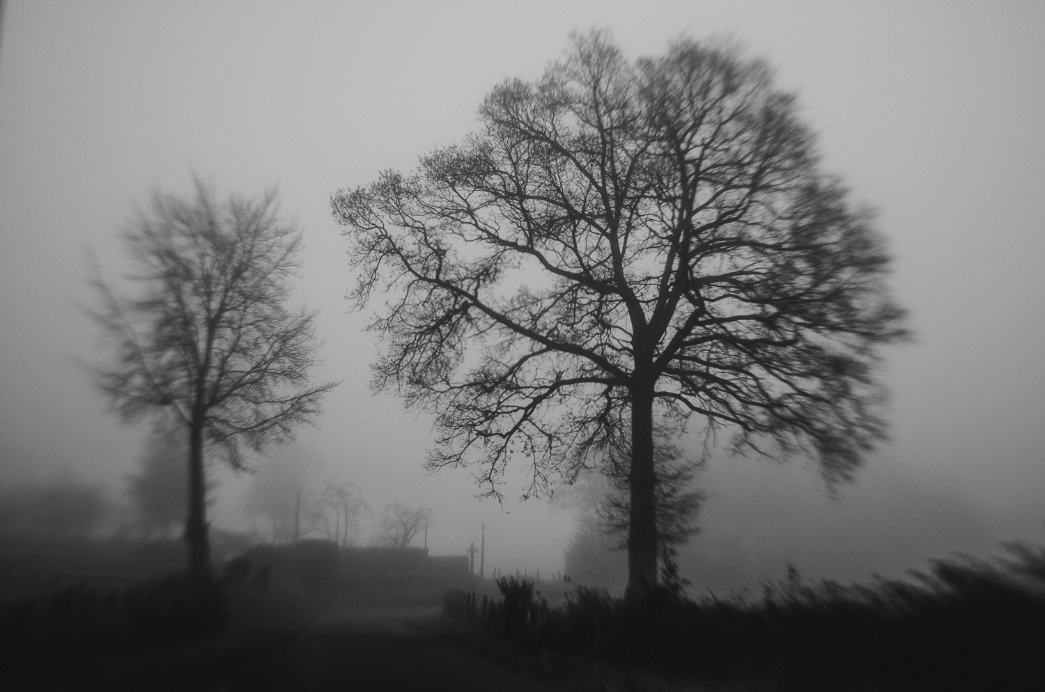 Foggy Woods-6-dec-2013.jpg