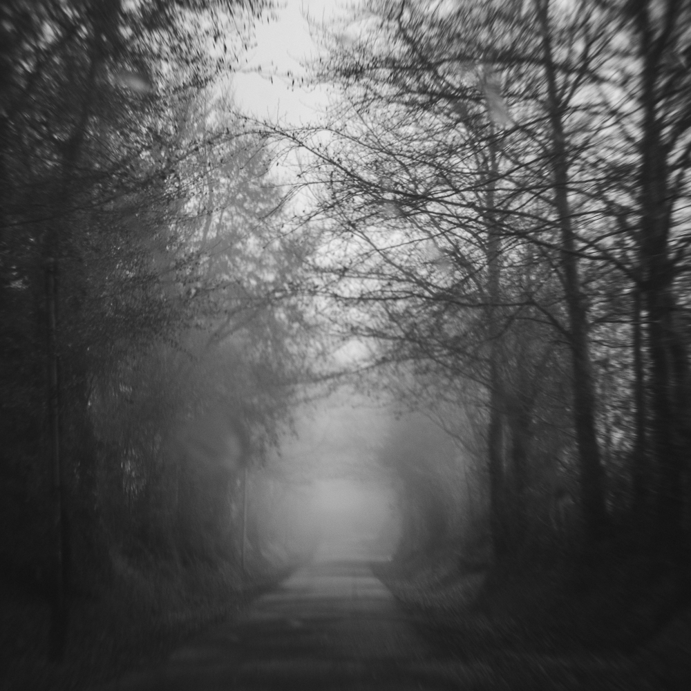 Foggy Woods-Square-5-dec-2013.jpg