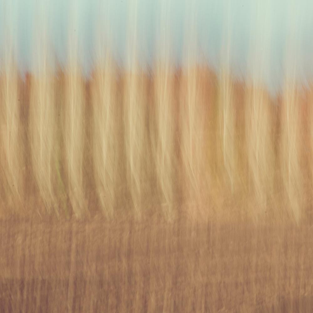 Landscape impressions-2-dec-2013.jpg