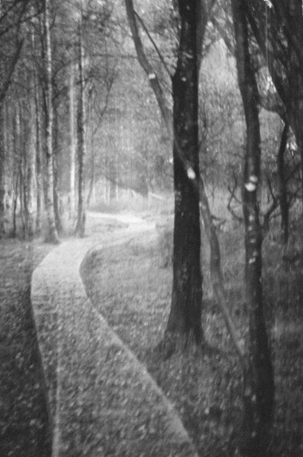 The haunted wood-B&W-2013-2-2.jpg