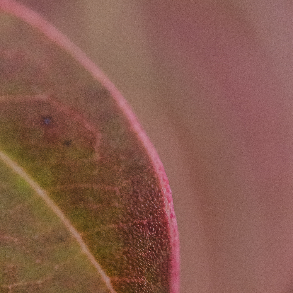 Colour-impressions-Macro-9-2013.jpg