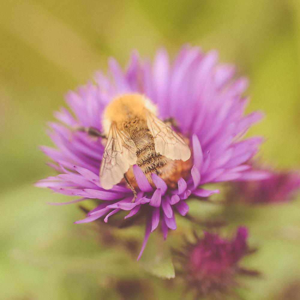 Bees Delight-2013.jpg