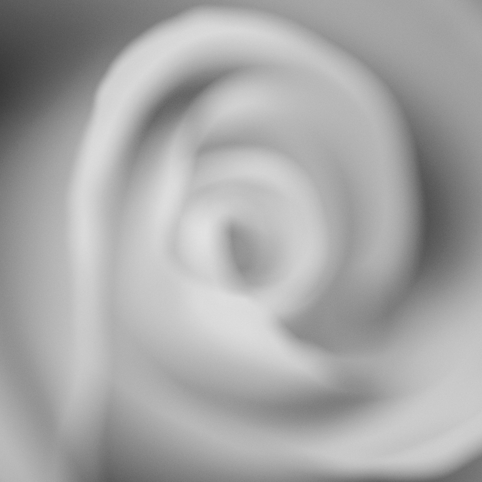 Impressions of a Rose- B&W- (6).jpg