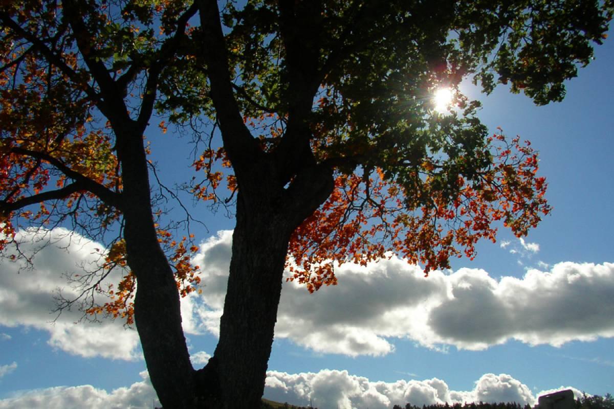 nature-q-c-1200-800-8.jpg