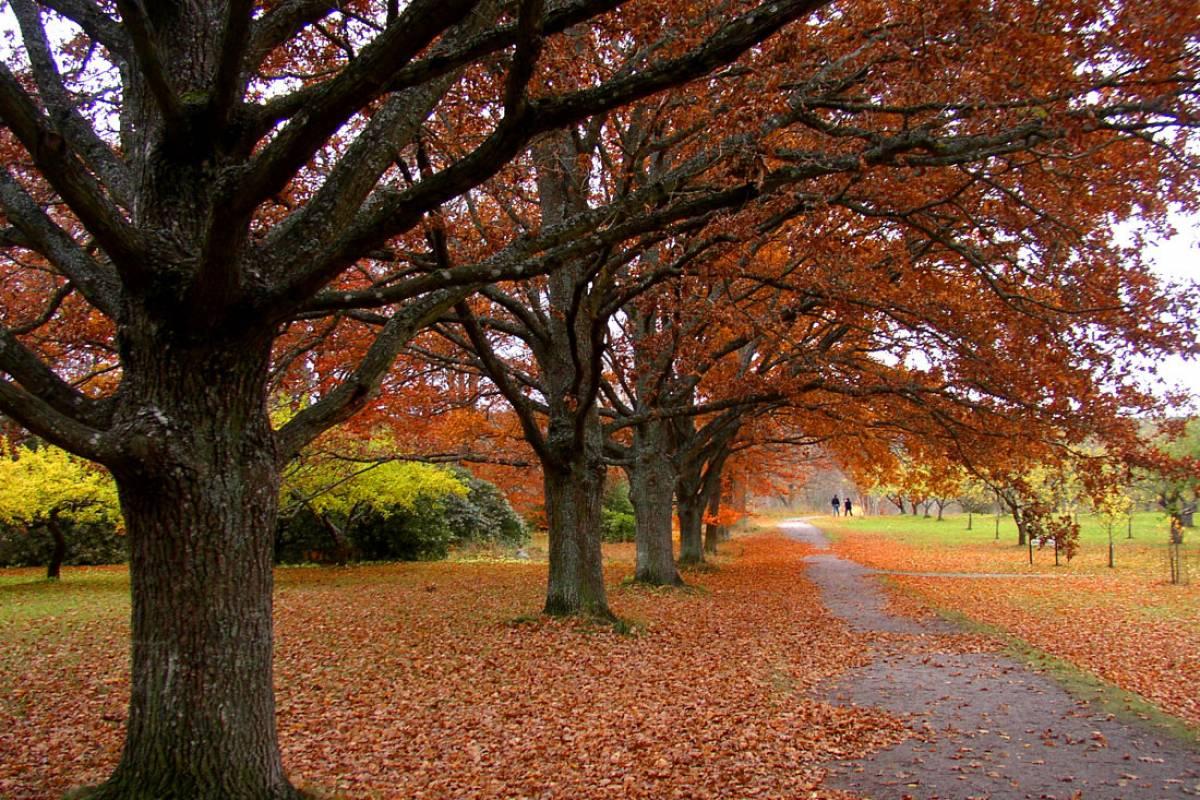 nature-q-c-1200-800-4.jpg