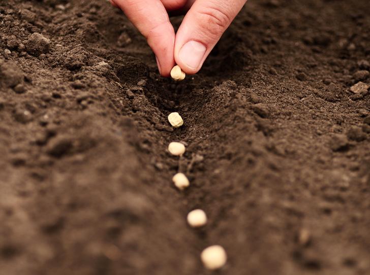 Planting-Seeds.jpg