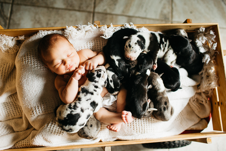 Newborn baby boy and puppies