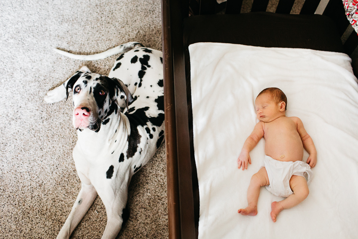 Large White Great Dane with Newborn Baby