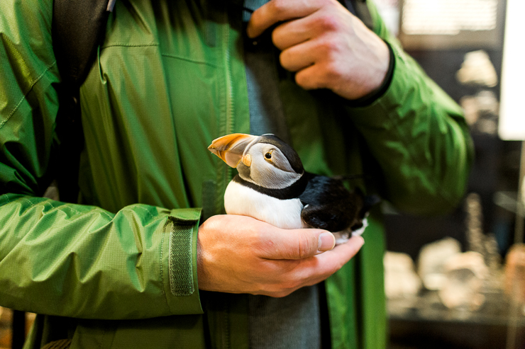 Holding a Puffin at Saeheimar