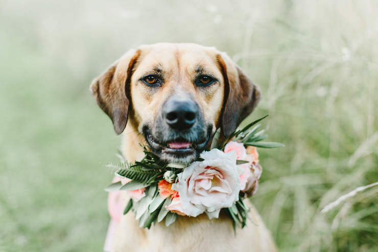 Dog with flower crown collar