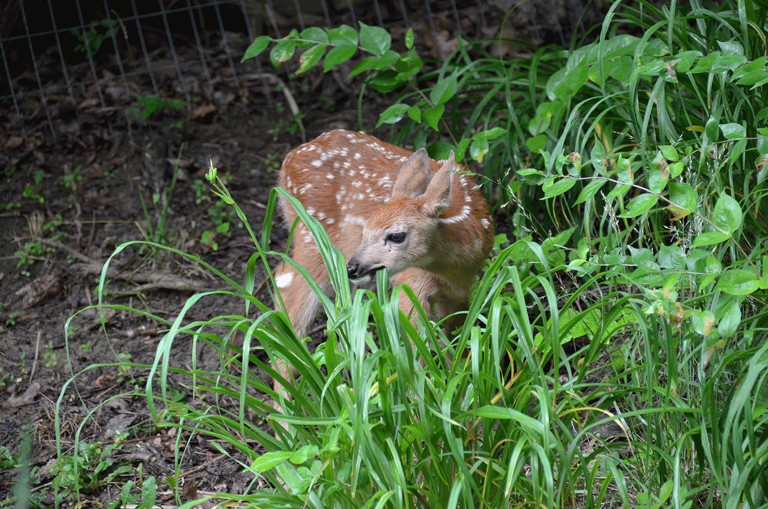 A third option is to get a pet deer. They destroy weeds and pretty much everything else. Super cute though.