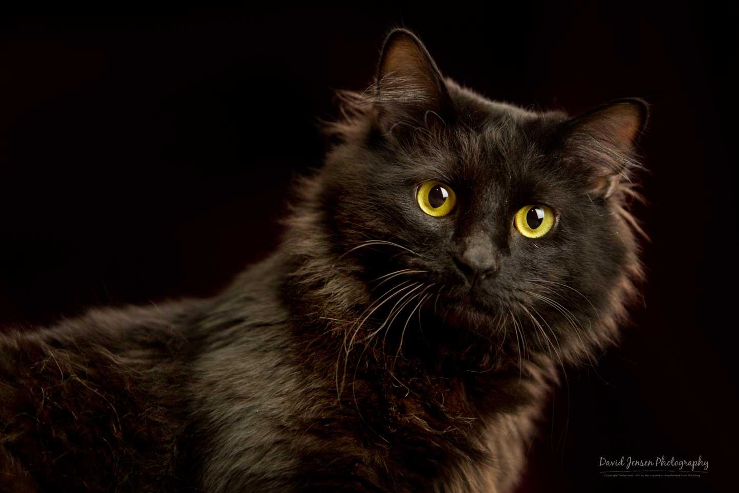KittyK9BL.jpg