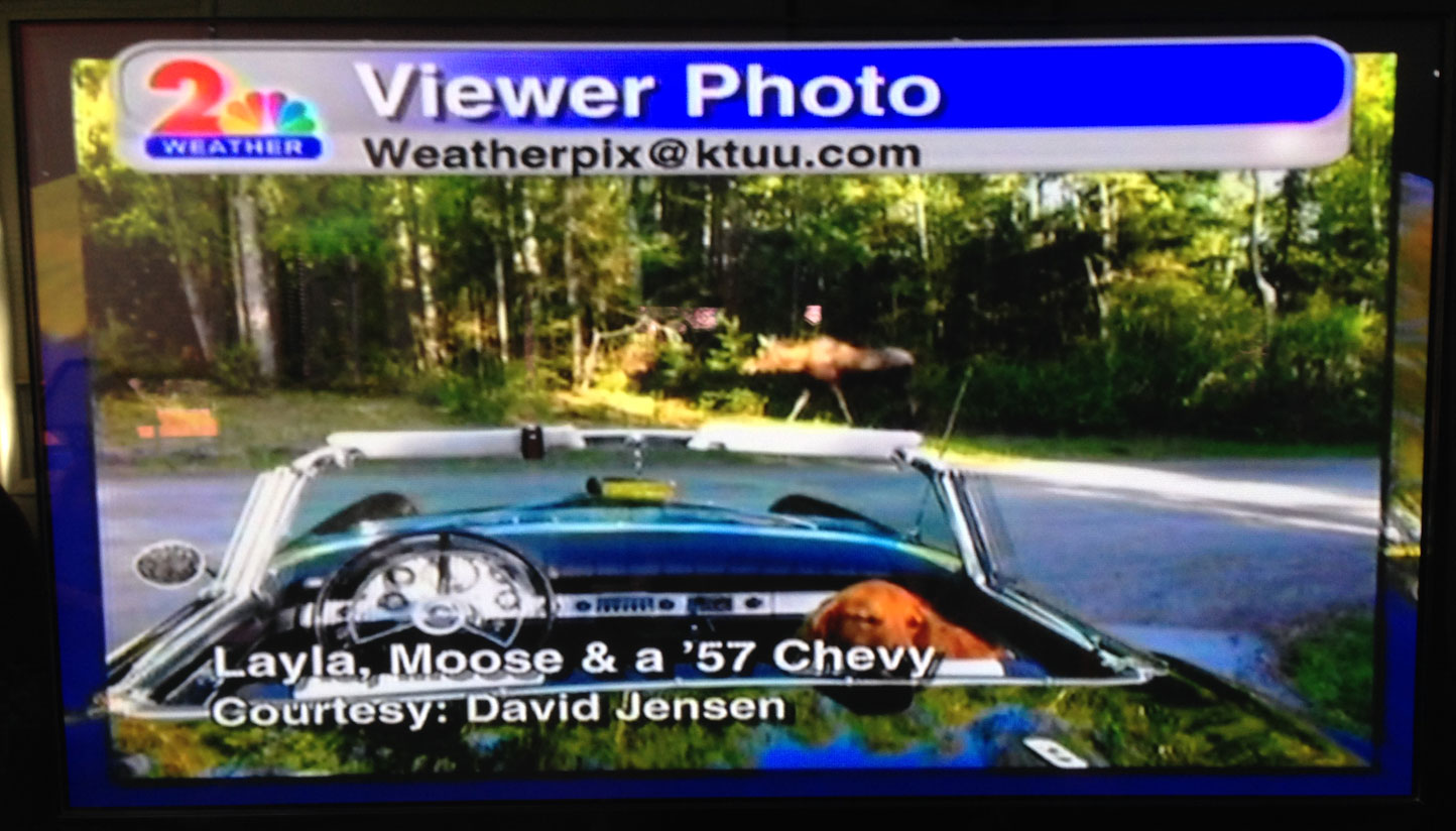 Carol sent this image to Jackie Purcell/KTUU (Alaska's best meteorologist) and it aired this evening. Mama moose has been chowing down a lot lately. We think she's about to have a baby moose or two very soon. Thank you Carol and Jackie!