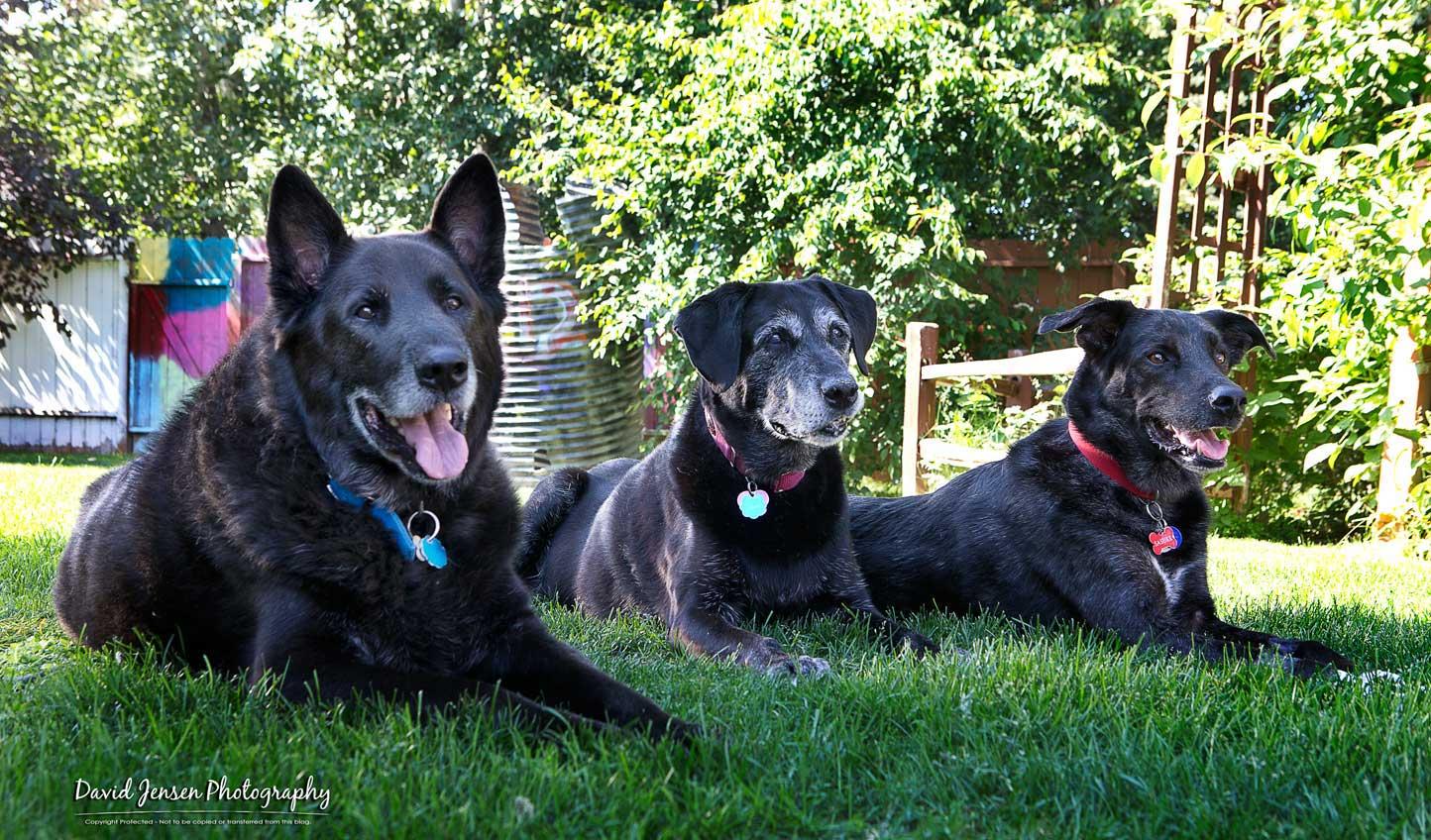 HulseX3dogs.jpg
